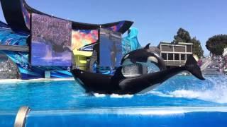 """圣地亚哥海洋公园 杀人鲸表演,整个观众席的人都""""湿身""""啦!好爽呀"""
