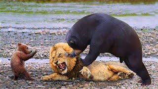 МЕДВЕДЬ В ДЕЛЕ! Медведь против Льва, Тигра, Моржа, Волков