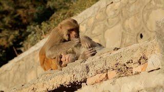 Хозяева непальских храмов! Орёл и Решка. Перезагрузка