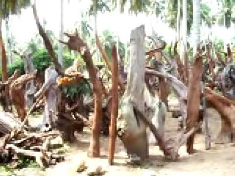 Bois De Recuperation Decoration récupération de bois mort pour décoration - youtube