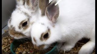 All about Rabbits with Our Resident Bunny Expert
