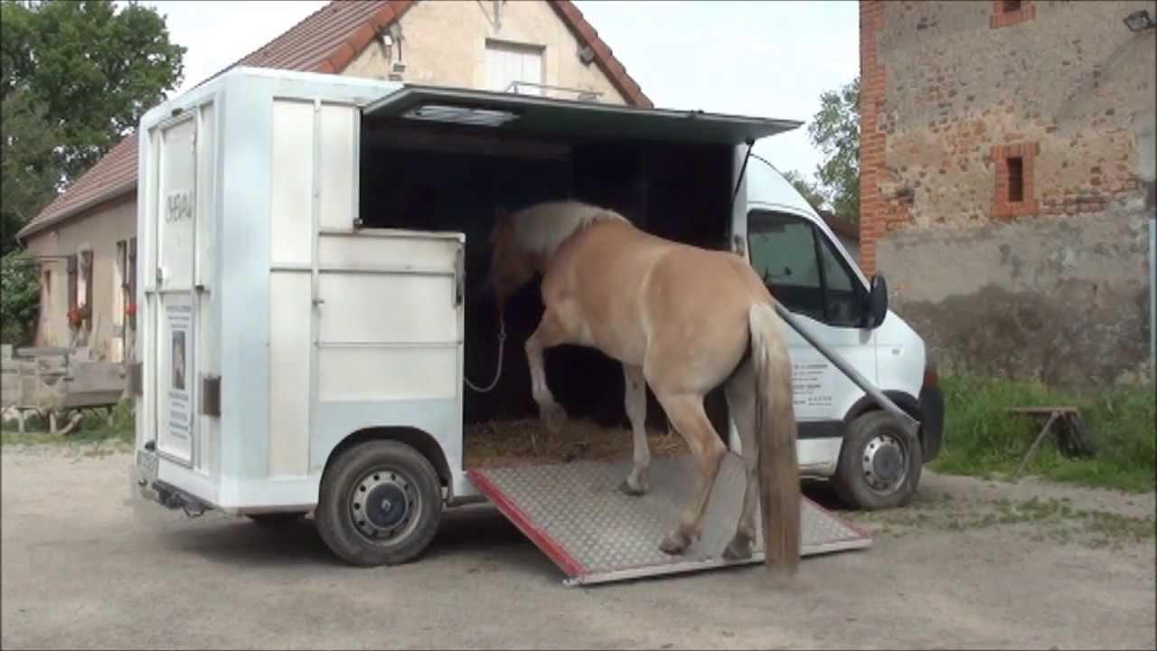 la licornerie m thode pour faire monter un cheval en camion ou en van et en libert youtube