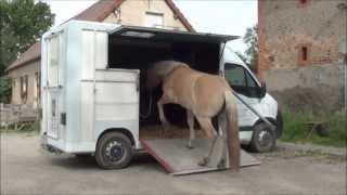 La LICORNERIE, méthode pour faire monter un cheval en camion ou en van et en liberté
