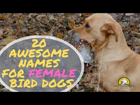 530 Creative and Original Female Dog Names for 2019 – Easy