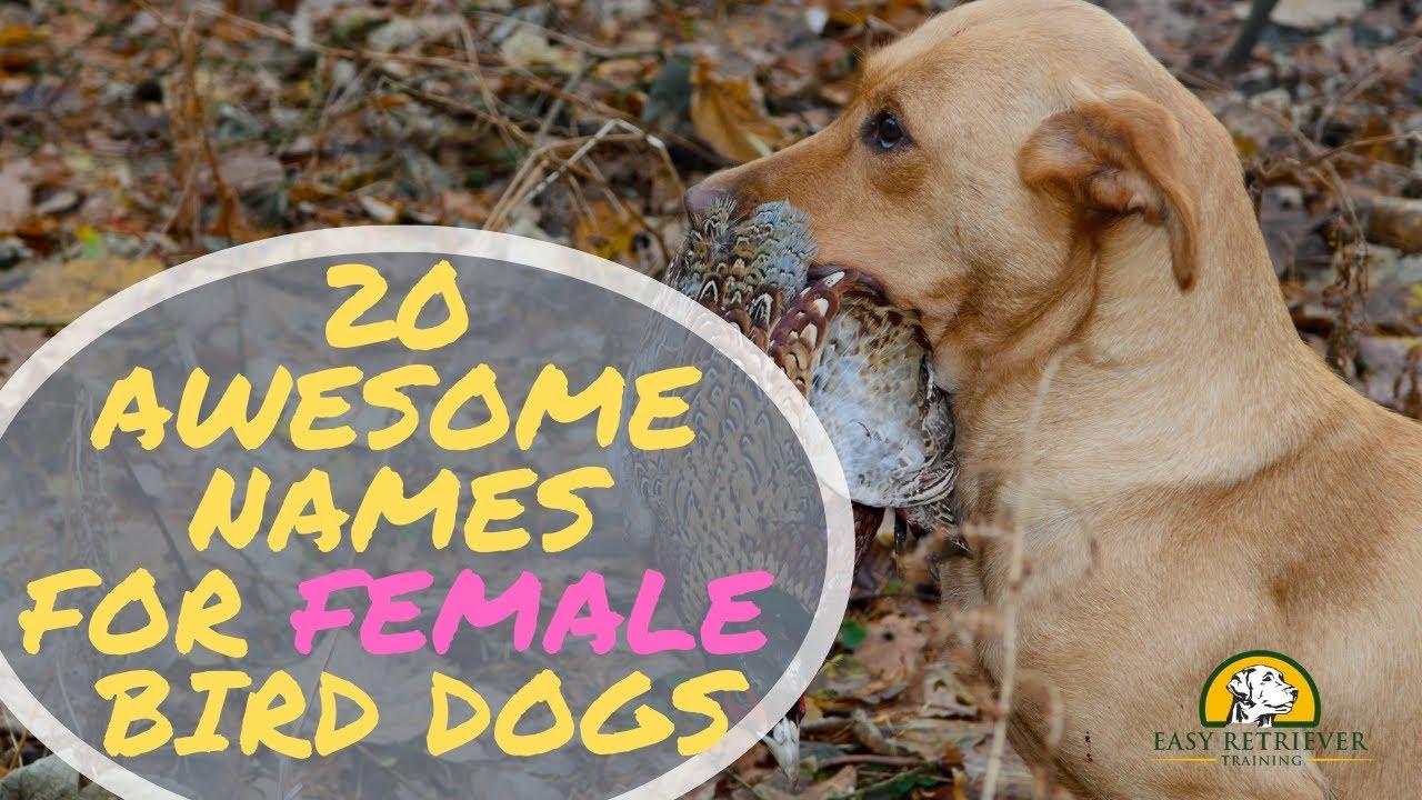 530 Creative and Original Female Dog Names for 2019 - Easy Retriever
