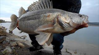 ЛОВЛЯ КРУПНЫХ СУДАКОВ-ЩУК ЭКСТРИМ(Ловля щуки и судака на живца.Все видео можно посмотреть на каналеhttps://www.youtube.com/user/Shark777attack7.Fishing trailer.Big pike and perch., 2014-10-09T17:10:57.000Z)