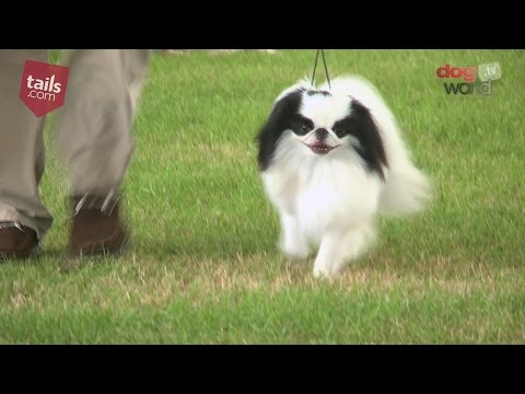 Windsor Dog Show 2016 - Toy group