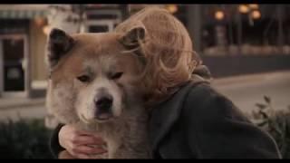 """""""ХАТИКО: САМЫЙ ВЕРНЫЙ ДРУГ"""" Преданный пес в течении 10 лет ждет умершего хозяина!"""