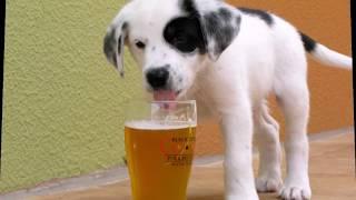 Какие продукты с нашего стола, токсичны для собак