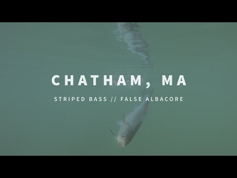 New England Fishing // Chatham Stripers & Albies // Episode 110