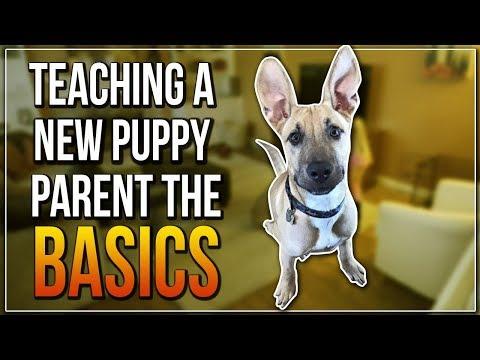 TEACHING A NEW PUPPY PARENT THE BASICS