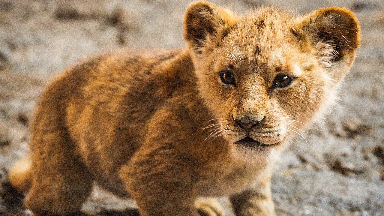 Lion Trailer