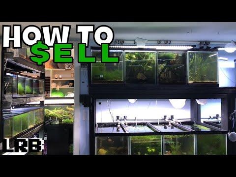 How To Sell Aquarium Fish, Shrimp, And Plants