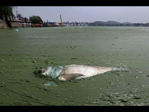 【もはや手遅れ!?】終末的状況にある中国の水質汚染の現状