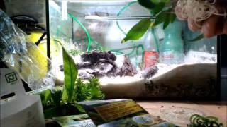 Triops Aquarium neu Einrichten Teil 2 (mit commentary)