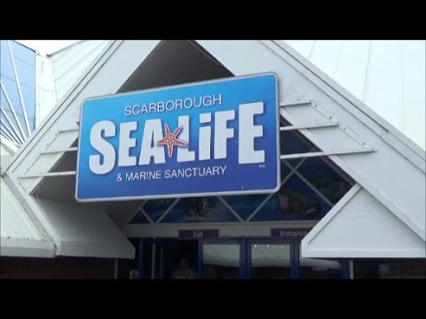 Scarborough SeaLife Centre - Full Walkthrough