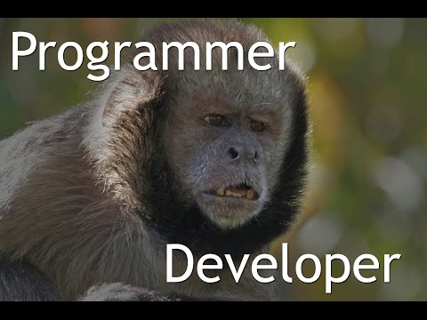 What is the difference between Programmer and Developer
