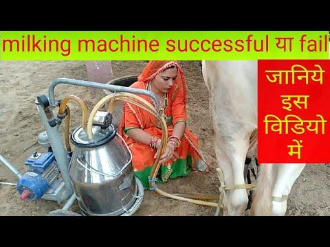 #dairyfarm#milkingmachine Milking Machine. Cow Milking By Milking Machine. देखीये हमारा  Dairy Farm.