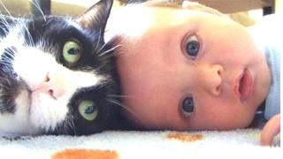 ねこ&赤ちゃん 目を離した隙にこんなことになっていた。超かわいい ねこ...