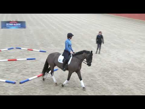 | Your Horse Magazine And Sammy Finnemore Help You Develop Your Horse's Paces