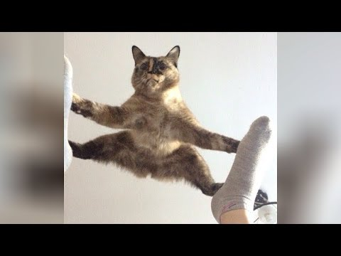 It's TIME for SUPER LAUGH! - Best FUNNY CAT videos thumbnail
