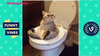 TubeSpaghetti - Funny Cats Compilation 2016 - Best Funny Cat Videos Ever || Funny Vines