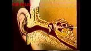 Анатомия уха человека.(Анатомия уха человека., 2014-05-12T19:54:41.000Z)