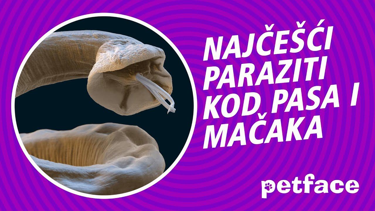 Crevni paraziti kod pasa simptomi, Condiloamele cervicale ce trebuie făcut