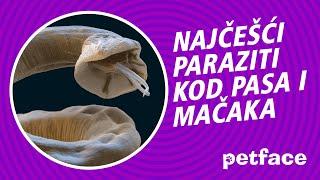 Crevni paraziti kod macaka, Paraziti zdravilo, červy narodnym cesta