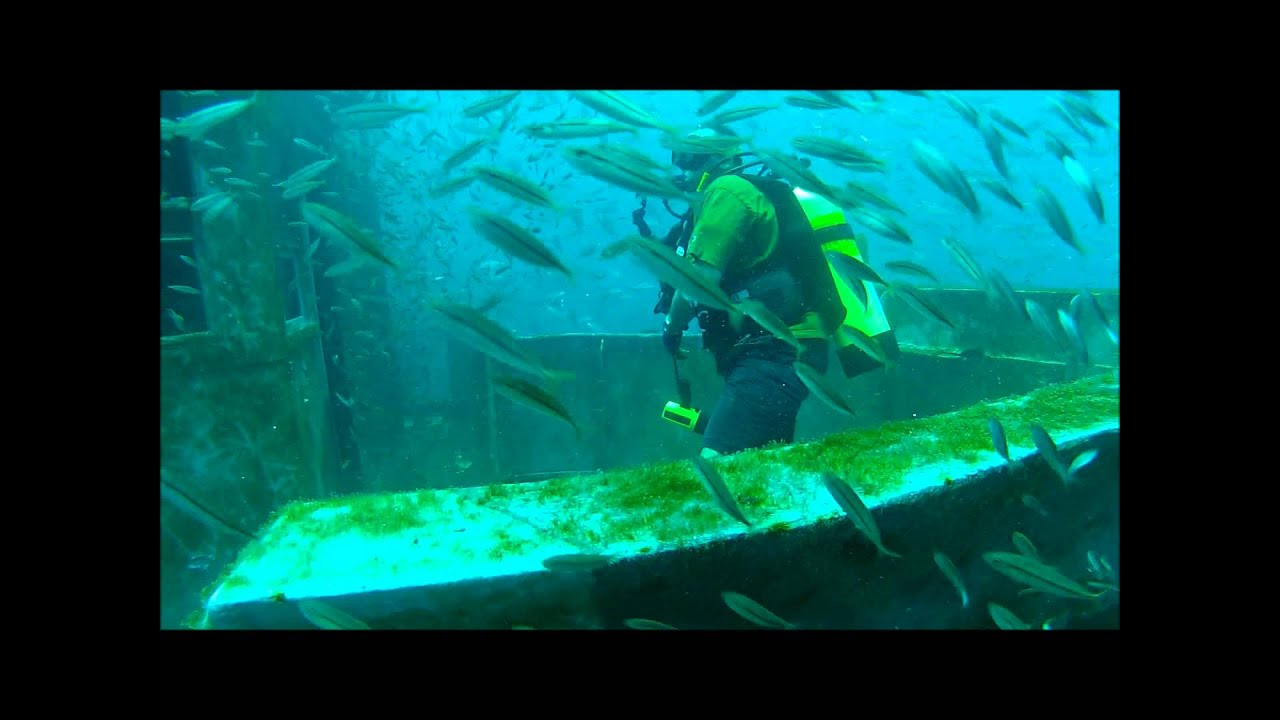 SCUBA Diving The USS Mohawk Goliath Groupers, Loaded With