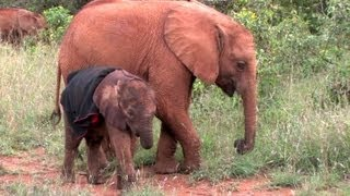 Ivory Orphans at the David Sheldrick Wildlife Trust in Kenya 2011