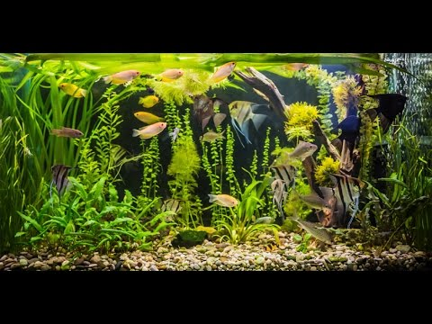 Аквариум. Советы для новичков. Основы содержания рыбок