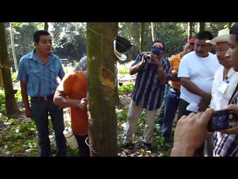 Pica en Guatemala