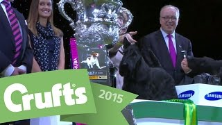 The Scottish Terrier wins Crufts Best in Show 2015