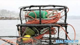 Huge Toxic Algal Bloom Shuts Down West Coast Fisheries