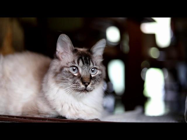 のらのお顔 Cat face 181118