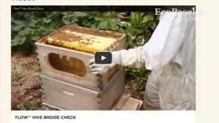 Новое слово в пчеловодстве: Улей-