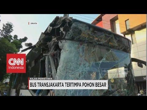 Bus Transjakarta Tertimpa Pohon Besar, Angkot Pengantar Pengantin Terjaring Razia - Kilas Peristiwa