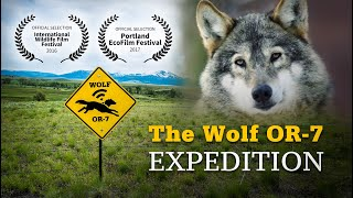 The Wolf OR-7 Expedition: 1200 Miles to Explore Human and Wolf Coexistence