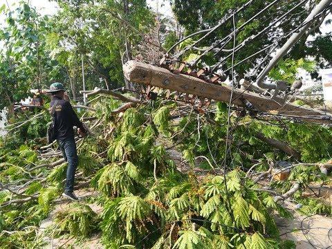 พายุฤดูร้อน ถล่มพิษณุโลกส่งท้ายสงกรานต์ เต้นท์งานสงกรานต์เสียหาย ต้นไม้ล้มและไฟฟ้าดับหลายพื้นที่