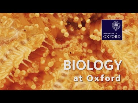 Biological Sciences at Oxford University