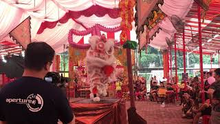 Kuan San Tang Lion Dance Traditional Performance at Sheng Lian Gong 21 July 2019