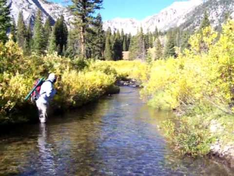 Jackson hole wyoming fall backcountry fly fishing youtube for Wyoming out of state fishing license