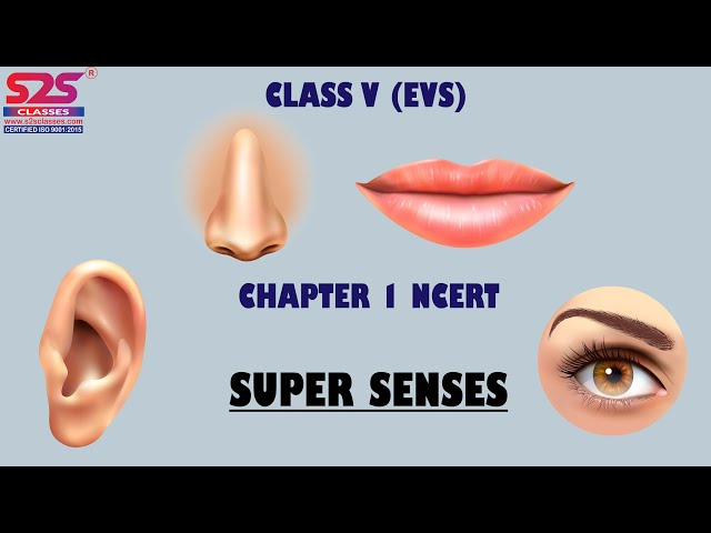 Class 5 EVS Super Senses Explanation in English | NCERT Class 5 EVS Chapter 1