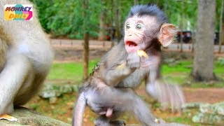 What sound why Daniela scare run to hug mom | Good baby happy eat food with mom | Monkey Daily 4101