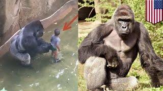 米オハイオ州のシンシナティ動物園で、飼育エリアに落下した男児(3)を...