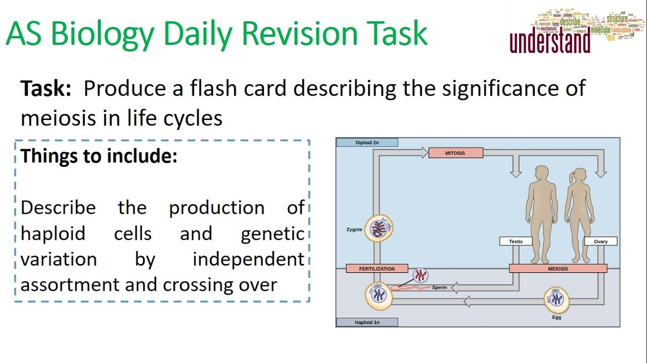 AS Biology Daily Revision Task 53:  The Need foe Meiosis - YouTube