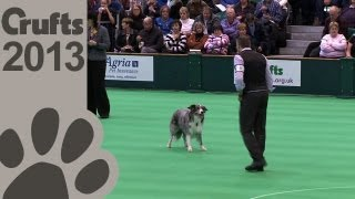 Obedience Dog Championships - Day 3 - Crufts 2013 (kevin Puckett & Majacabus Billy Bombastic)