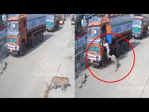 CCTV Footage of Leopard Trying To Escape In Hyderabad