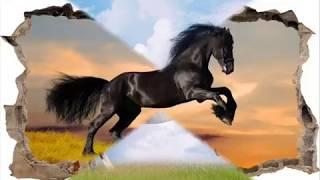 moja pasja;konie